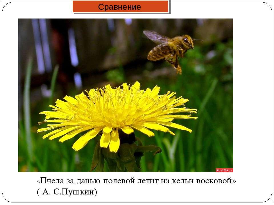 «Пчела за данью полевой летит из кельи восковой» ( А. С.Пушкин) Сравнение