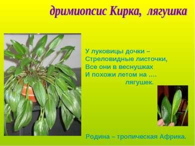 У луковицы дочки – Стреловидные листочки, Все они в веснушках И похожи летом ...