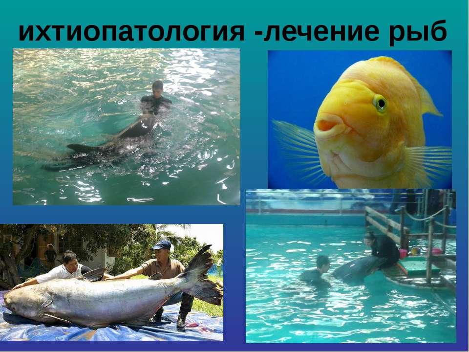 ихтиопатология -лечение рыб