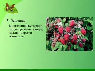 Малина Многолетний кустарник. Ягоды среднего размера, красной окраски, аромат...