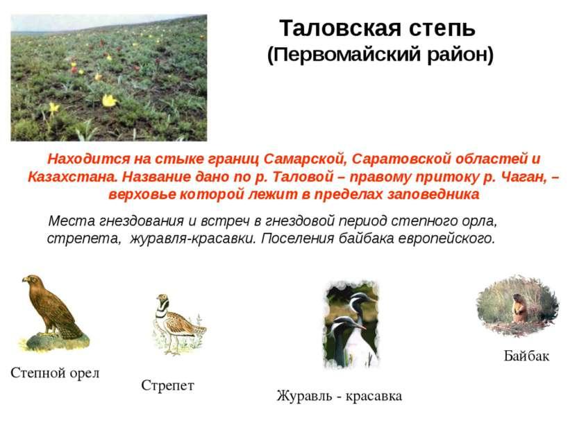 Таловская степь (Первомайский район) Находится на стыке границ Самарской, Сар...