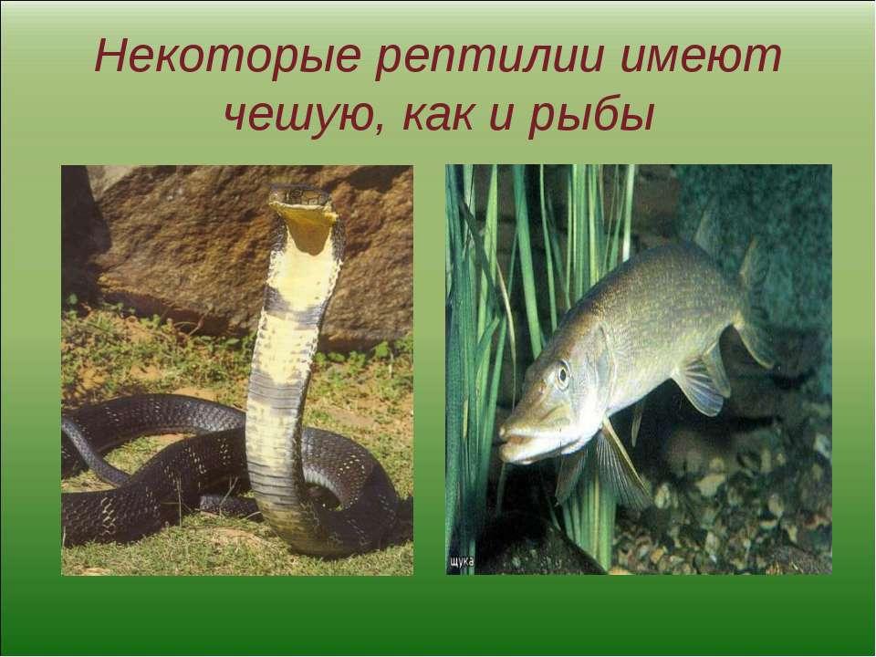 Некоторые рептилии имеют чешую, как и рыбы