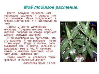 Моё любимое растение. Как-то бабушка принесла нам небольшое растение и сказал...