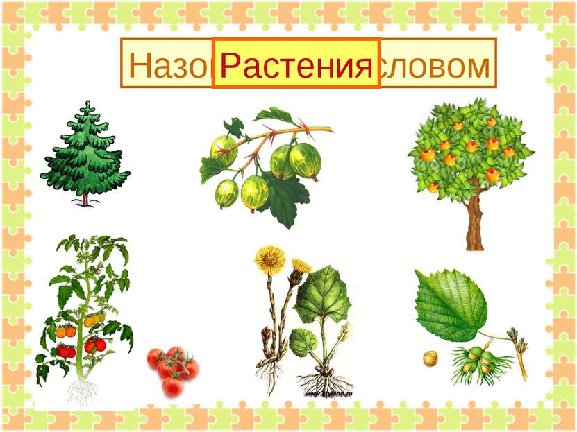 Назови одним словом Растения