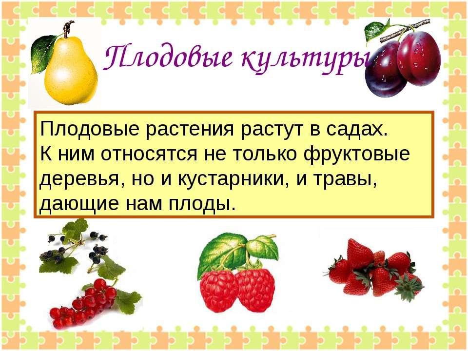 Плодовые культуры Плодовые растения растут в садах. К ним относятся не только...