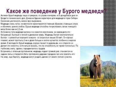 Какое же поведение у Бурого медведя? Активен бурый медведь чаще в сумерках, п...