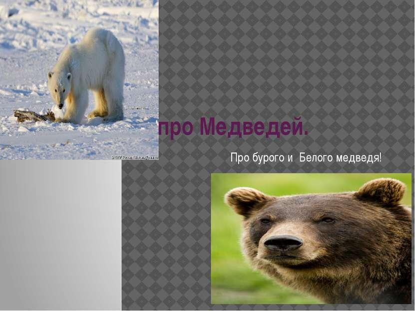 про Медведей. Про бурого и Белого медведя!