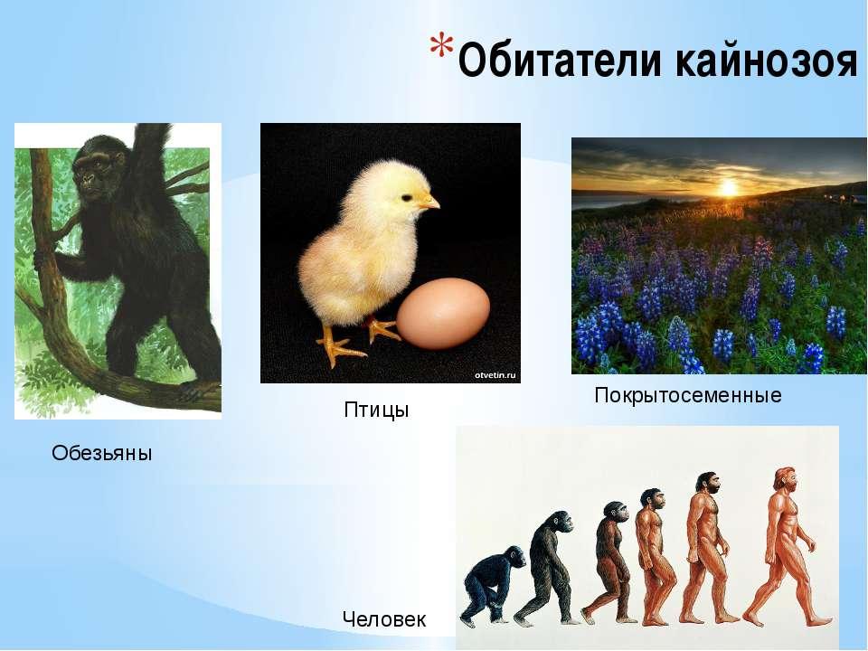 Обитатели кайнозоя Обезьяны Птицы Покрытосеменные Человек