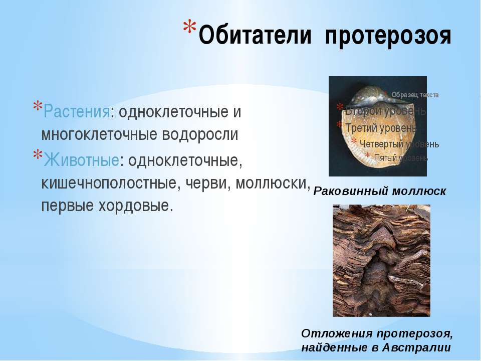 Обитатели протерозоя Растения: одноклеточные и многоклеточные водоросли Живот...