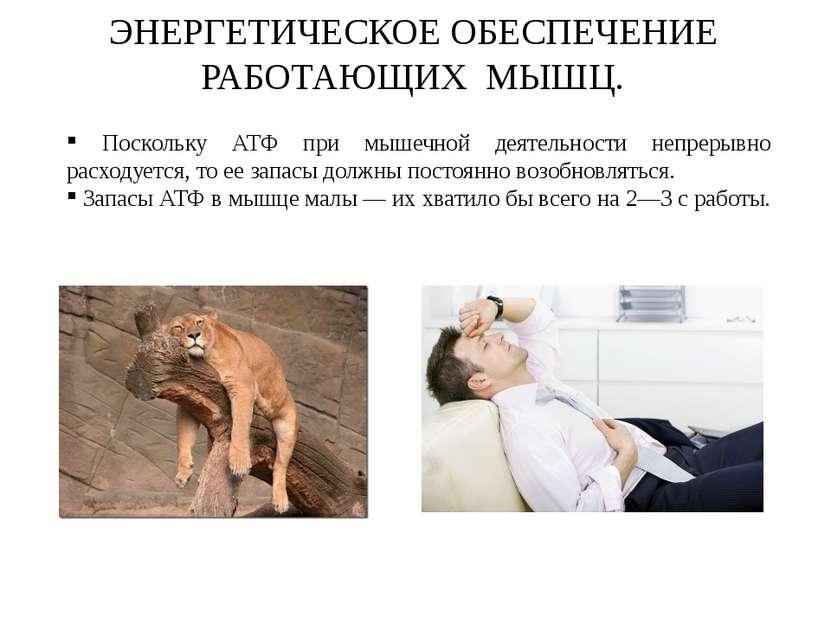 ЭНЕРГЕТИЧЕСКОЕ ОБЕСПЕЧЕНИЕ РАБОТАЮЩИХ МЫШЦ. Поскольку АТФ при мышечной деятел...