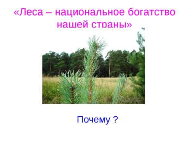 «Леса – национальное богатство нашей страны» Почему ?