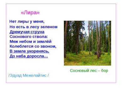 «Лира» Нет лиры у меня, Но есть в лесу зеленом Дремучая струна Соснового ство...