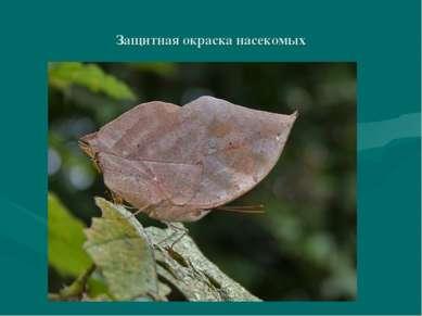 Защитная окраска насекомых