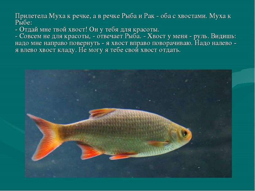 Прилетела Муха к речке, а в речке Рыба и Рак - оба с хвостами. Муха к Рыбе: -...