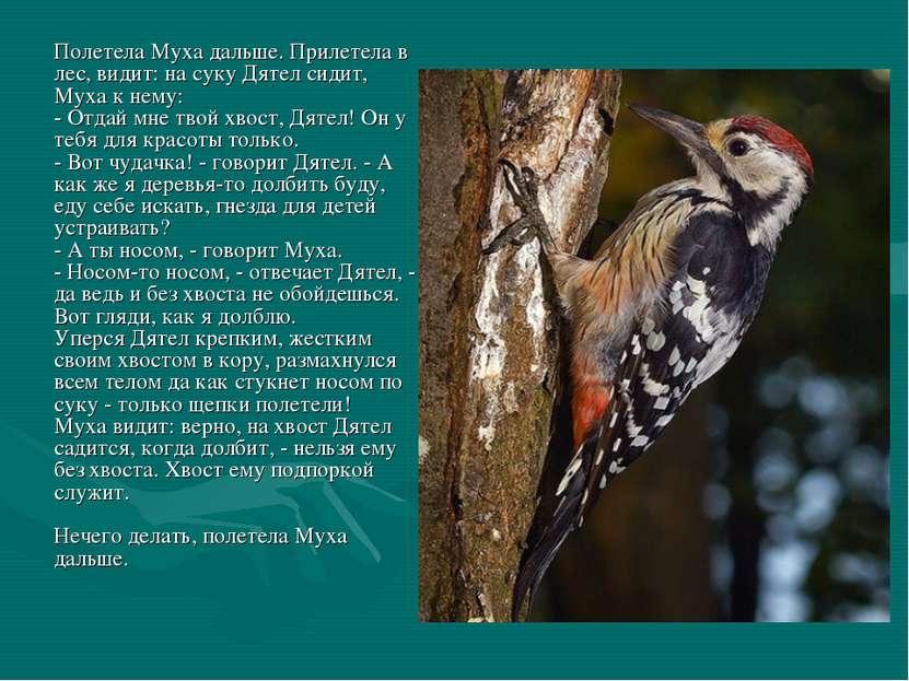 Полетела Муха дальше. Прилетела в лес, видит: на суку Дятел сидит, Муха к нем...