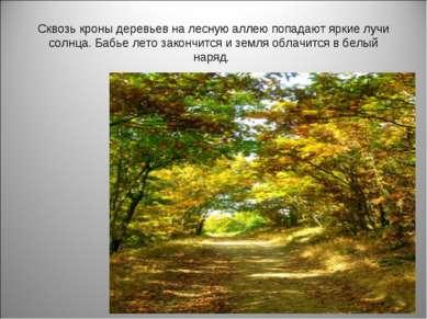 Сквозь кроны деревьев на лесную аллею попадают яркие лучи солнца. Бабье лето ...