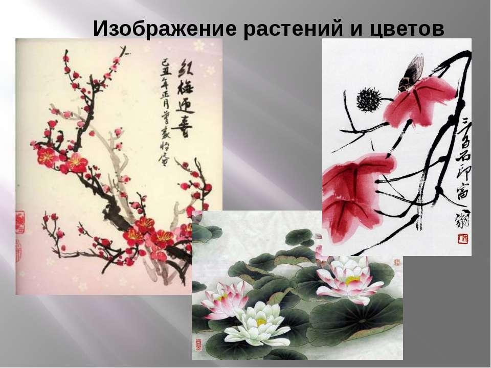 Изображение растений и цветов