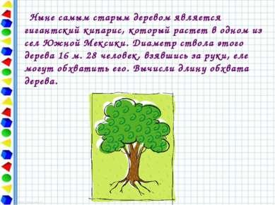 Ныне самым старым деревом является гигантский кипарис, который растет в одном...