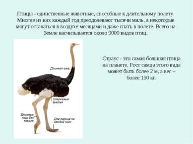 Птицы - единственные животные, способные к длительному полету. Многие из них ...