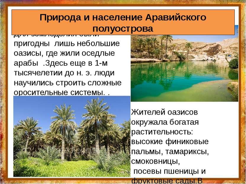 Для земледелия были пригодны лишь небольшие оазисы, где жили оседлые арабы .З...
