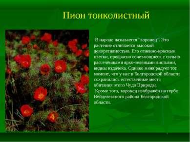 """Пион тонколистный В народе называется """"воронец"""". Это растение отличается высо..."""