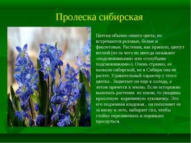 Пролеска сибирская Цветки обычно синего цвета, но встречаются розовые, белые ...