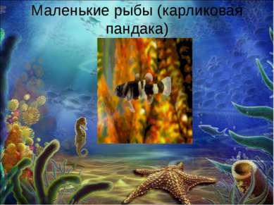Маленькие рыбы (карликовая пандака)
