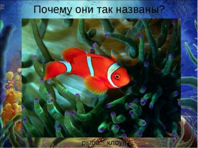 Почему они так названы? рыба - клоун