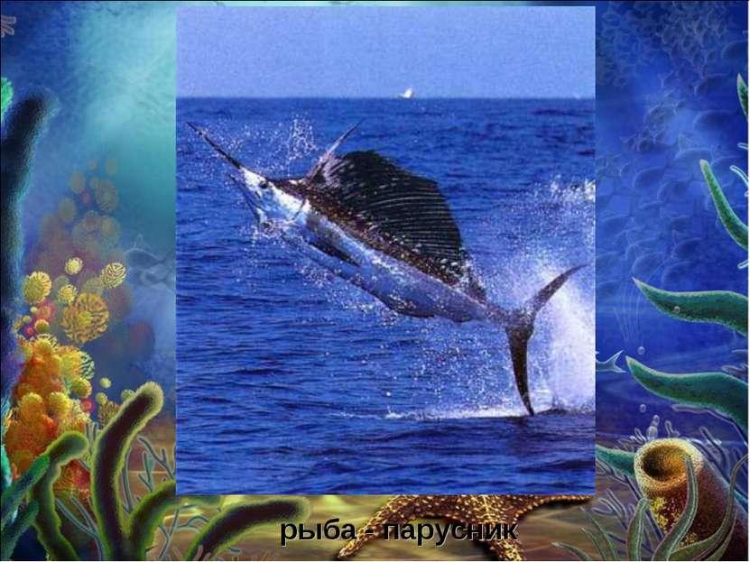 рыба - парусник