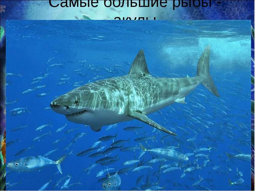 Самые большие рыбы - акулы