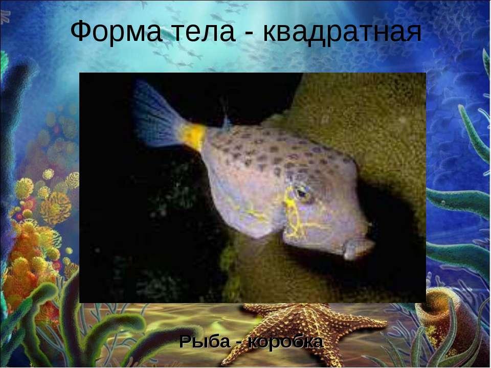 Форма тела - квадратная Рыба - коробка