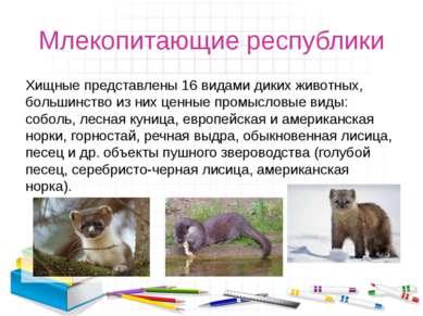 Млекопитающие республики Хищные представлены 16 видами диких животных, больши...