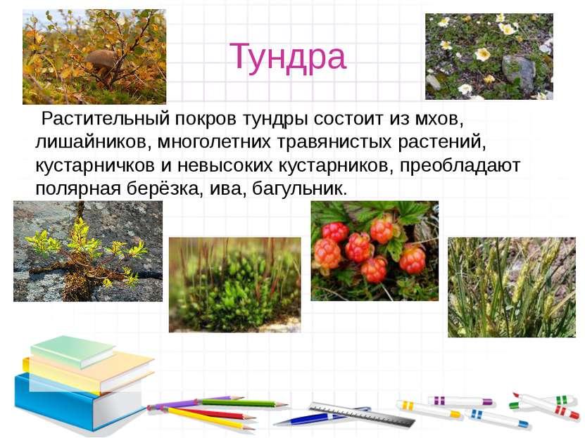 Тундра Растительный покров тундры состоит из мхов, лишайников, многолетних т...