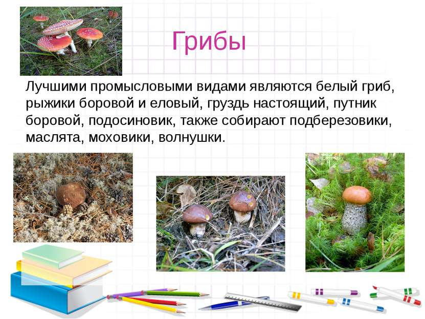 Грибы Лучшими промысловыми видами являются белый гриб, рыжики боровой и еловы...