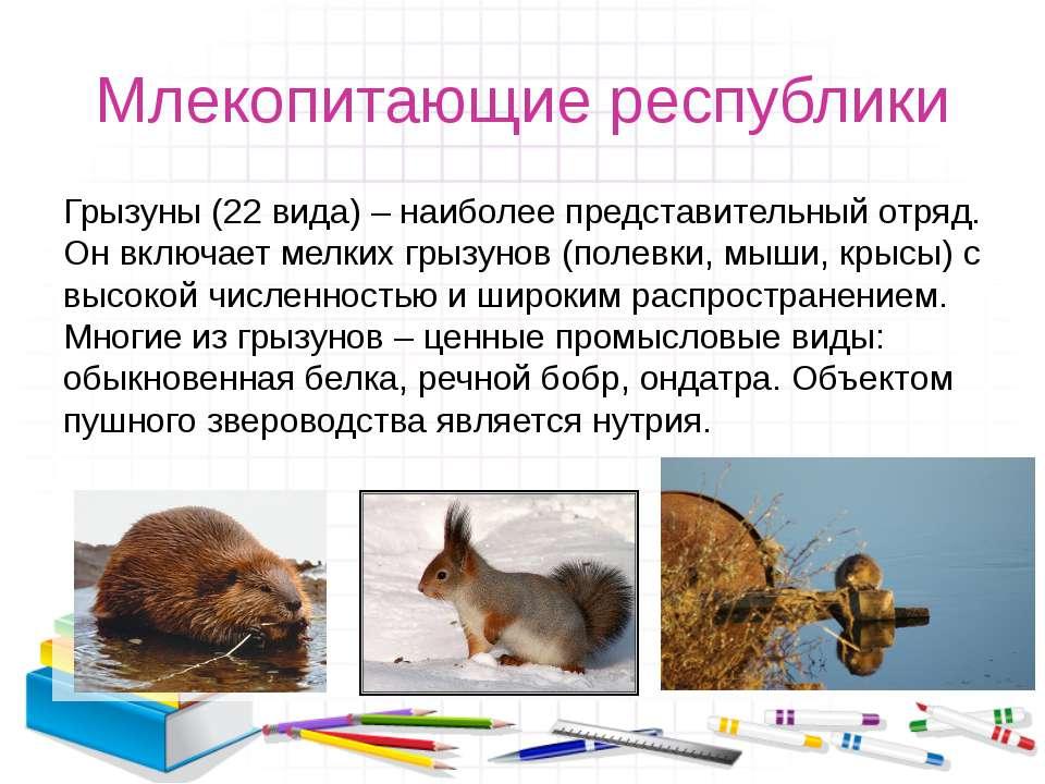 Млекопитающие республики Грызуны (22 вида) – наиболее представительный отряд....