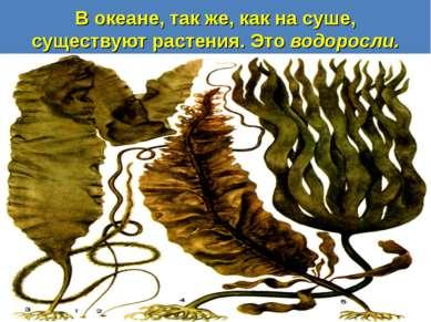 В океане, так же, как на суше, существуют растения. Это водоросли.