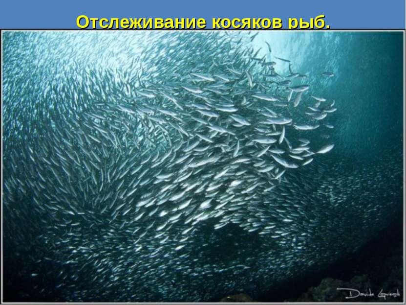 Отслеживание косяков рыб.