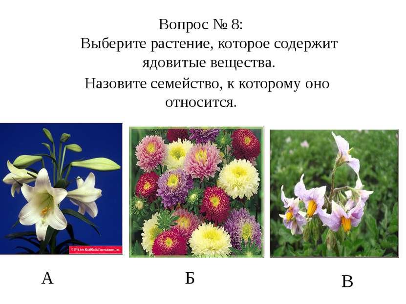 А Б В Вопрос № 8: Выберите растение, которое содержит ядовитые вещества. Назо...
