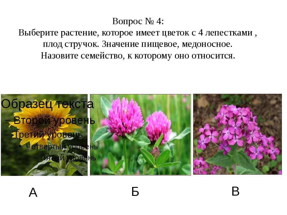 А Б В Вопрос № 4: Выберите растение, которое имеет цветок с 4 лепестками , пл...