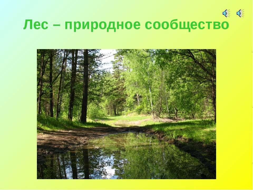 Лес – природное сообщество