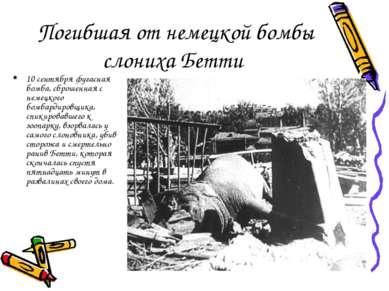 Погибшая от немецкой бомбы слониха Бетти 10 сентября фугасная бомба, сброшенн...