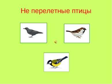 Не перелетные птицы
