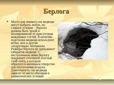 Берлога Место для зимнего сна медведи могут выбрать любое, но главное условие...