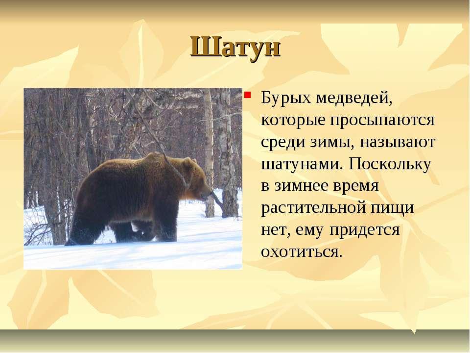 Шатун Бурых медведей, которые просыпаются среди зимы, называют шатунами. Поск...