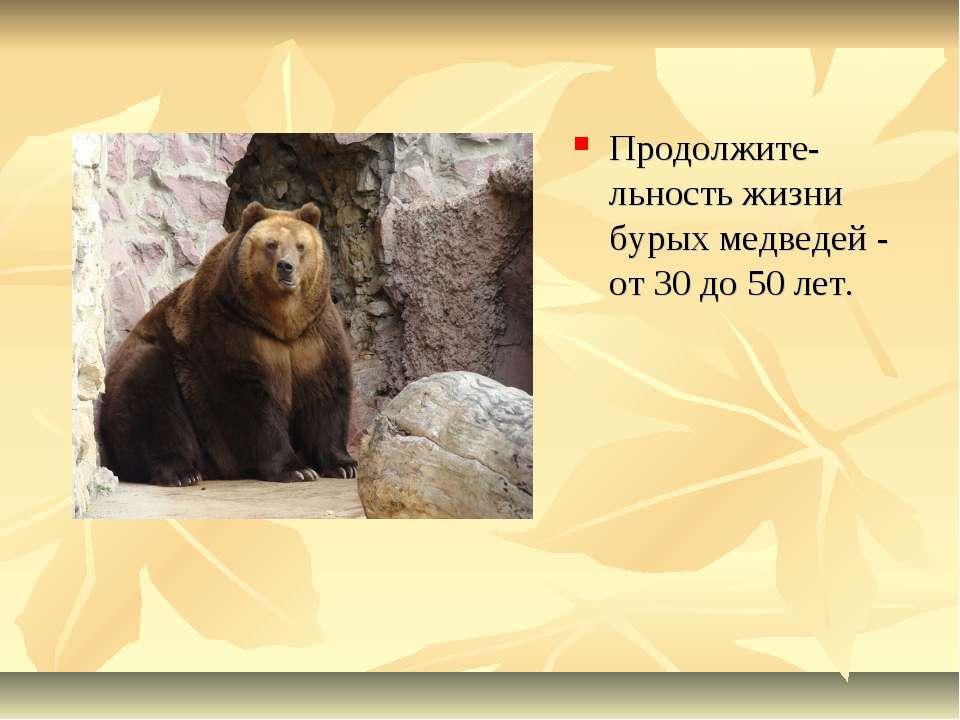 Продолжите-льность жизни бурых медведей - от 30 до 50 лет.
