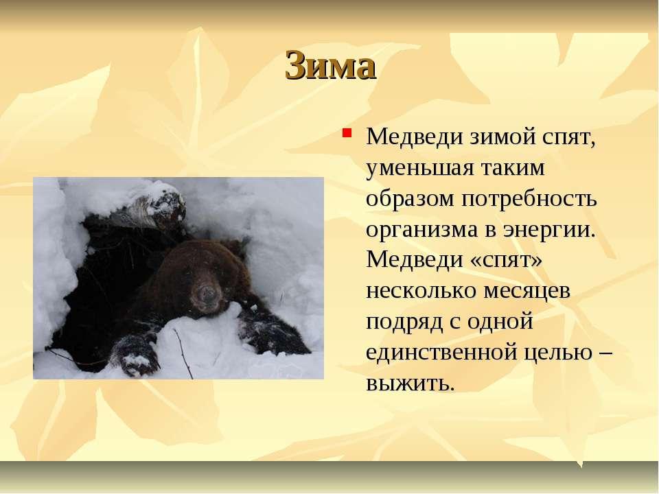 Зима Медведи зимой спят, уменьшая таким образом потребность организма в энерг...