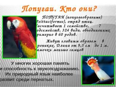 Попугаи. Кто они? ПОПУГАИ (попугаеобразные) (Psittaciformes), отряд птиц. Нас...