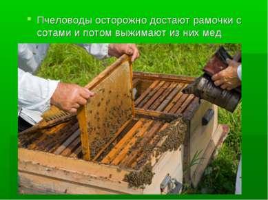 Пчеловоды осторожно достают рамочки с сотами и потом выжимают из них мед