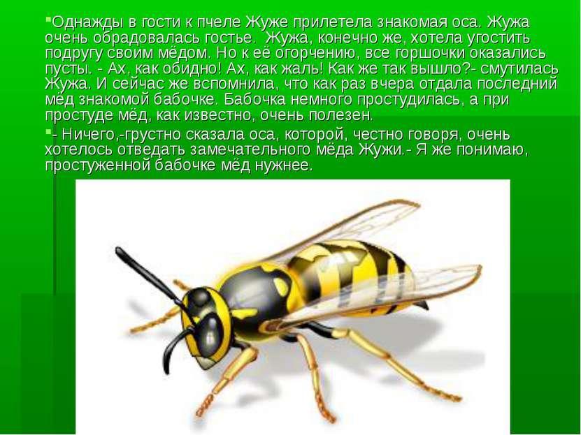 Однажды в гости к пчеле Жуже прилетела знакомая оса. Жужа очень обрадовалась ...