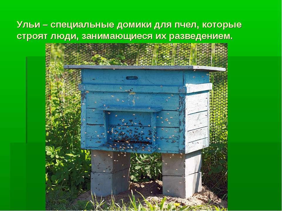 Ульи – специальные домики для пчел, которые строят люди, занимающиеся их разв...